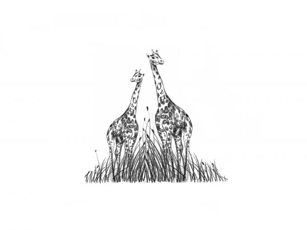A3 'Two Giraffes' print