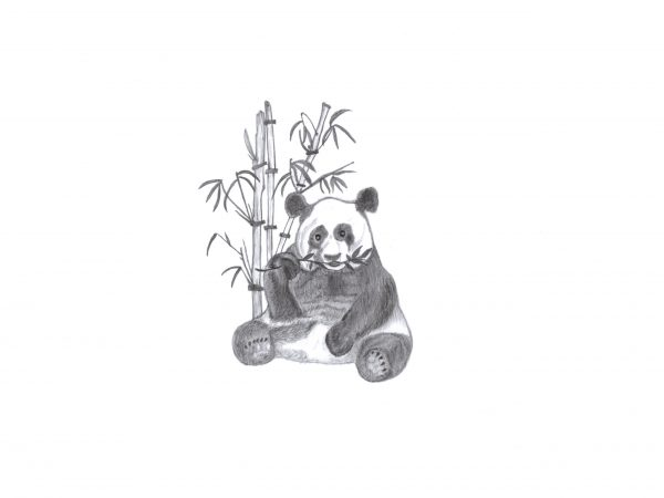 A3 'Panda' print Sent With Love Designs By A Little Bit Of Hope